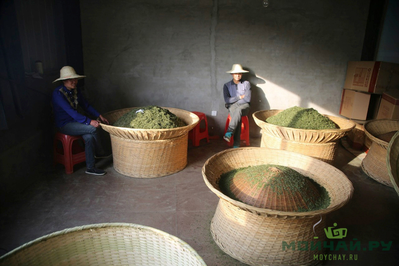 green tea manufacturing Moychay