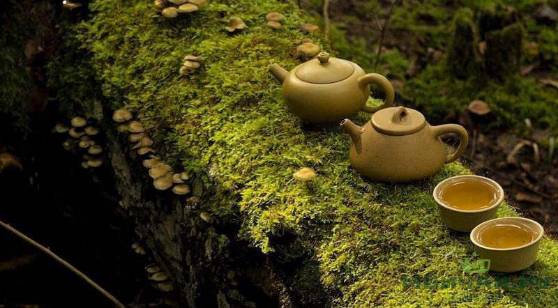 forest tea ceremony