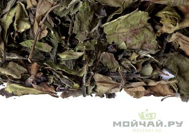 White Tea Wuyi Shou Mei